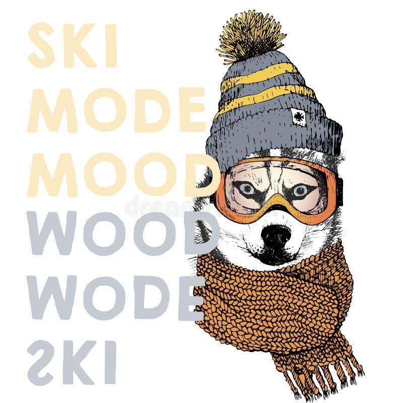 Vector el cartel con cierre encima del retrato del perro del husky siberiano Humor del modo del esquí Gorrita tejida, bufanda y g libre illustration