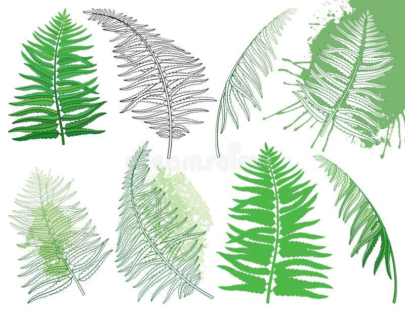 Vector el dibujo del sistema con las frondas fósiles del helecho del bosque del esquema en verde negro y en colores pastel colore libre illustration