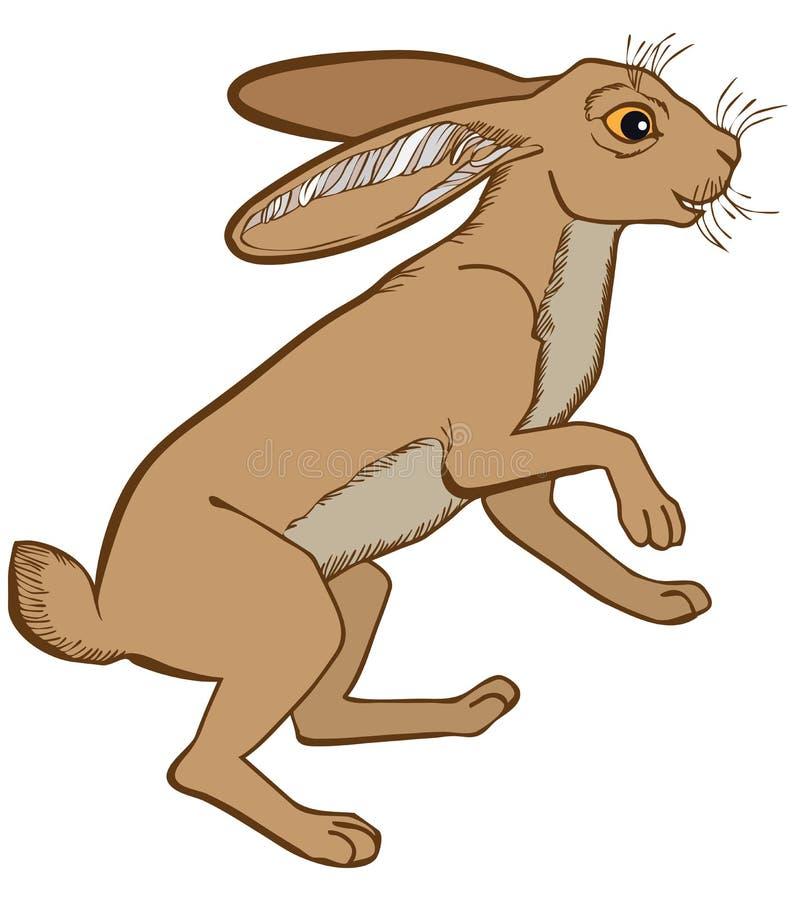 Vector el ejemplo de colorido del conejo de las liebres aislado en el fondo blanco libre illustration