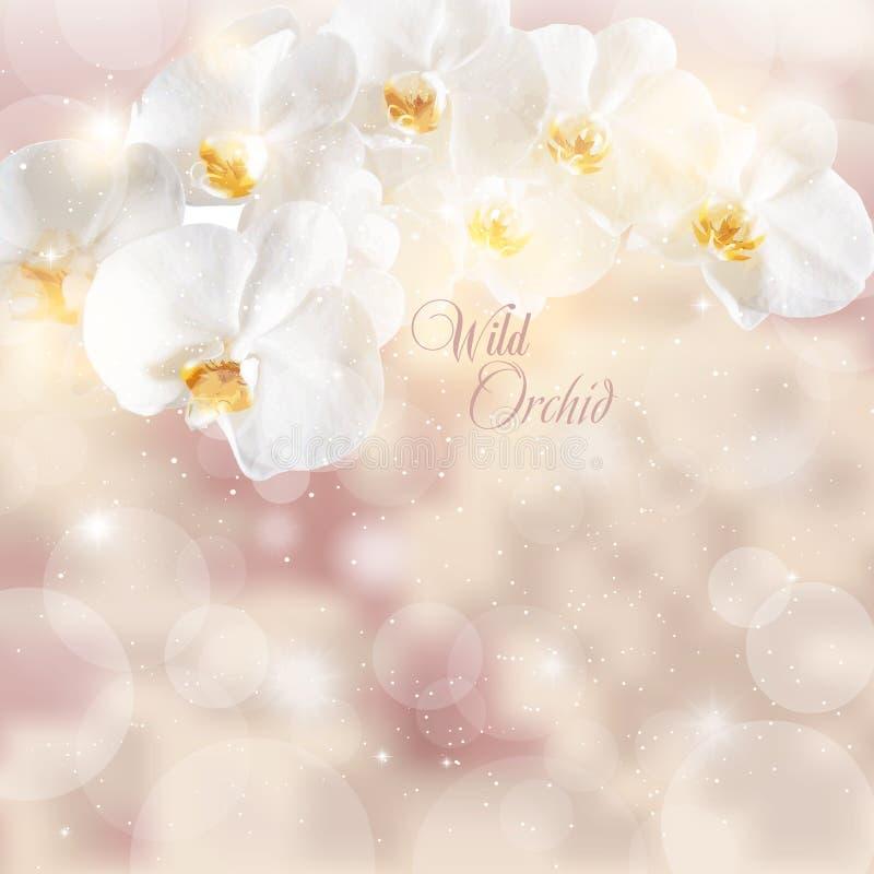 Vector el ejemplo de las puntillas de las orquídeas blancas encendido libre illustration