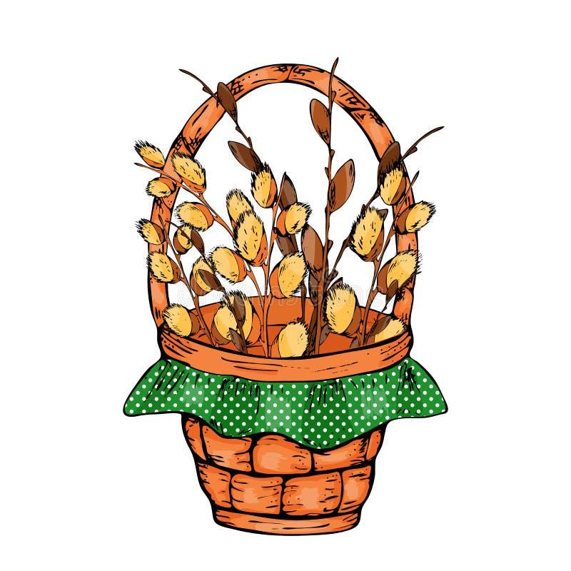 Vector el ejemplo de las ramas del sauce de la primavera en el fondo blanco Ramo del sauce de la primavera con el arco amarillo libre illustration