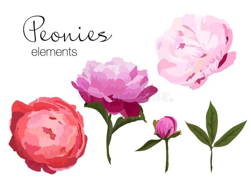 Vector el ejemplo de los elementos coloridos de las flores de las peonías en el fondo blanco stock de ilustración