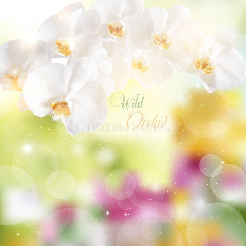 Vector el ejemplo de una rama con las orquídeas blancas ilustración del vector