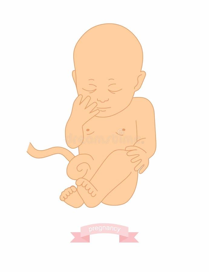 Vector el ejemplo del ejemplo de un bebé en la matriz stock de ilustración