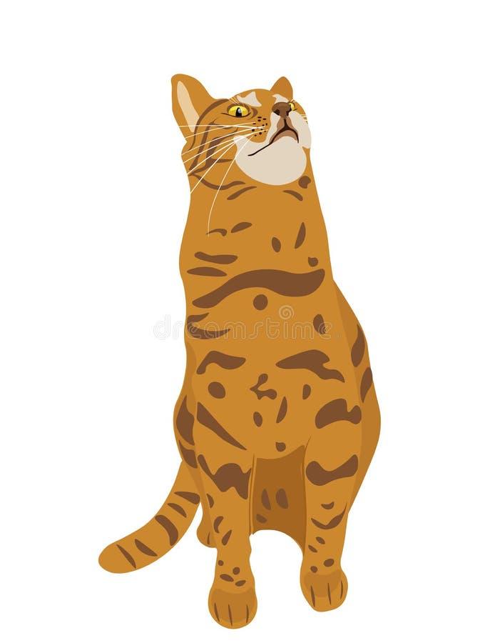 Vector el ejemplo del gato de Breeded del abisinio con la cabeza para arriba y el pelo corto rojo que se sienta en el fondo blanc ilustración del vector