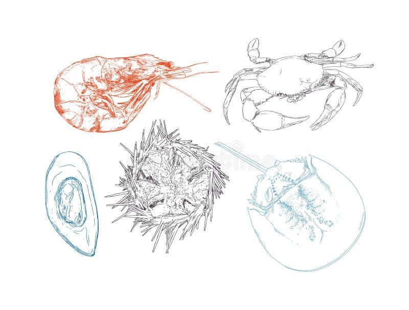 Vector el ejemplo del grabado del seaf dibujado mano altamente detallada stock de ilustración