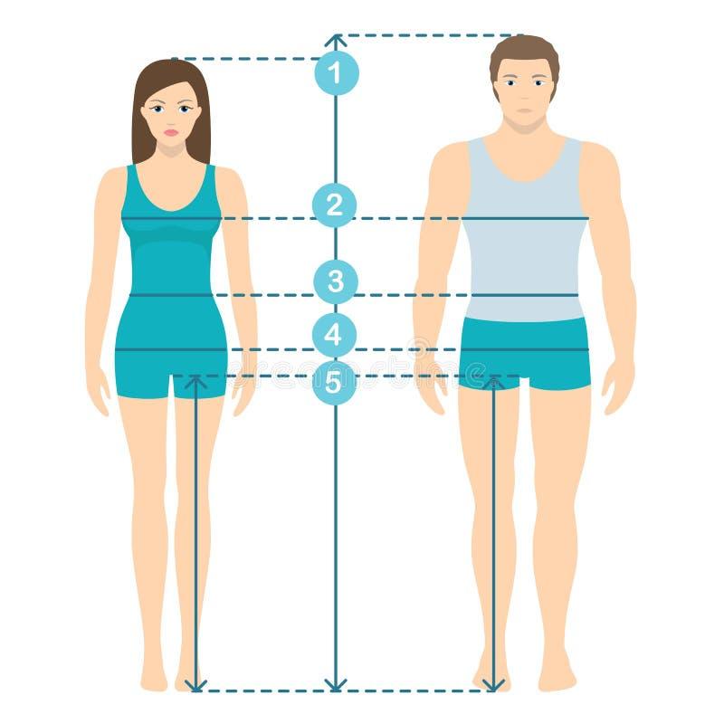 Vector el ejemplo del hombre y de mujeres en integral con las líneas de la medida de parámetros del cuerpo Medidas de los tamaños libre illustration