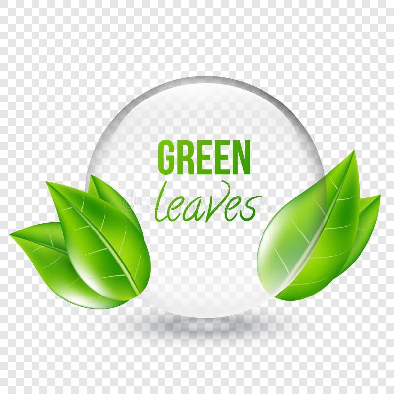 Vector el ejemplo del shere transparente con las hojas verdes para el diseño, tarjetas de visita Fondo transparente stock de ilustración