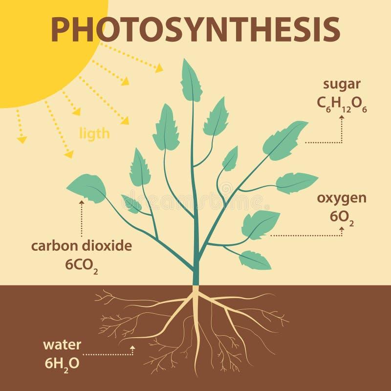 Vector el ejemplo esquemático que muestra la fotosíntesis de la planta - infographic agrícola ilustración del vector
