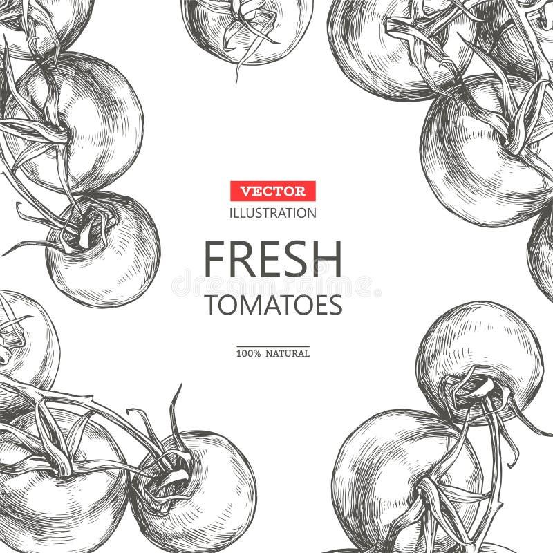 Vector el fondo botánico del vintage con el isolat de las verduras frescas libre illustration