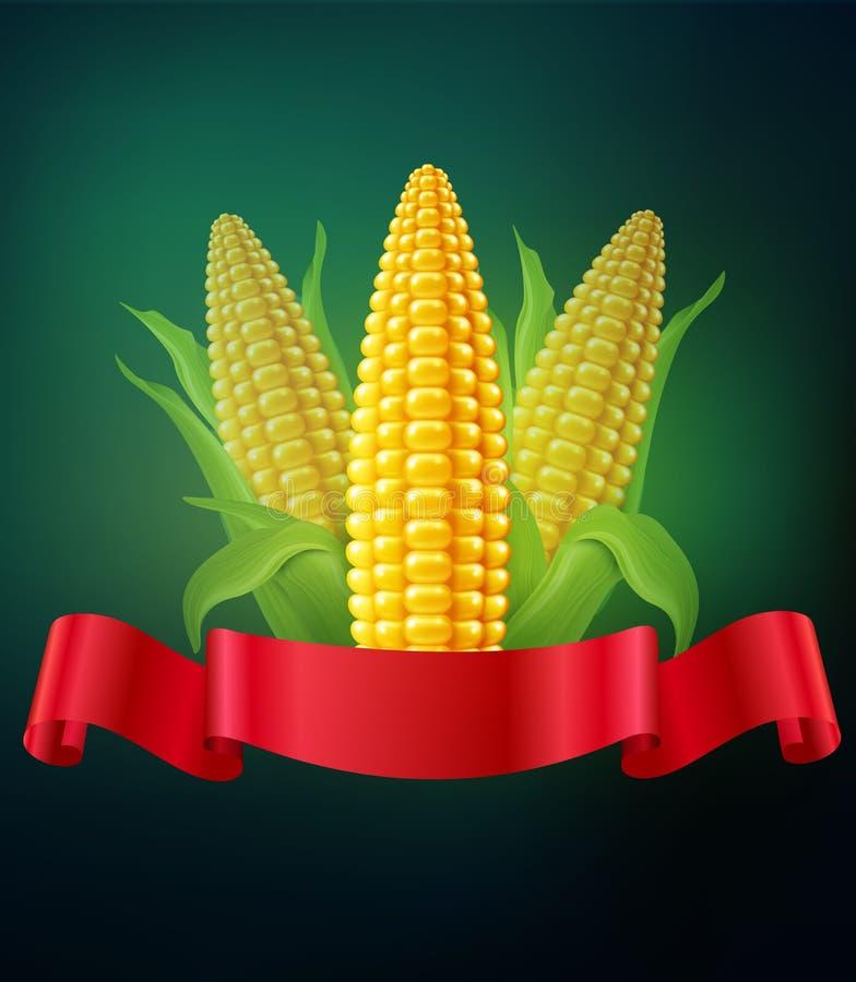 Vector el fondo con las mazorcas del maíz y de la cinta roja ilustración del vector