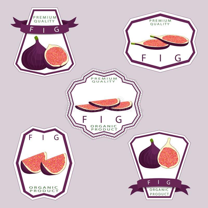 Vector el logotipo del ejemplo del icono para el higo maduro entero de la púrpura de la fruta stock de ilustración