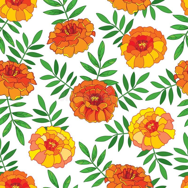 Vector el modelo inconsútil con el esquema flor anaranjada de Tagetes o de la maravilla ilustración del vector