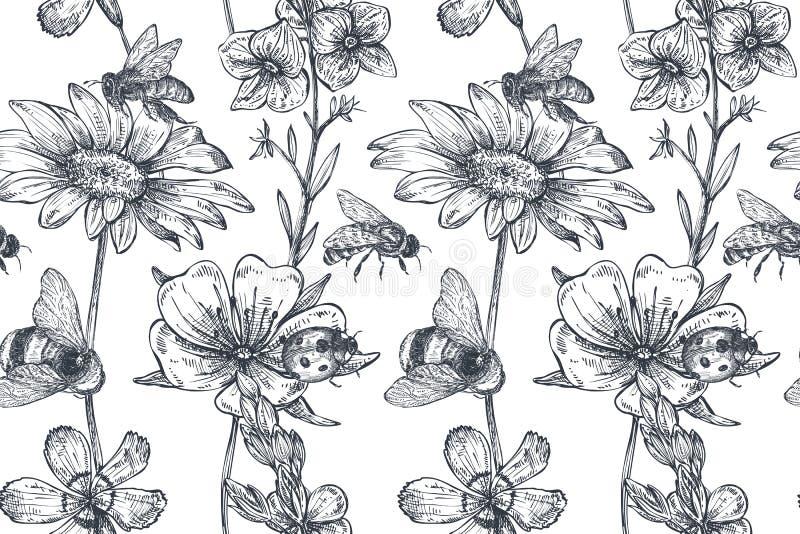 Vector el modelo inconsútil con la manzanilla dibujada mano, wildflowers, hierbas, abeja stock de ilustración