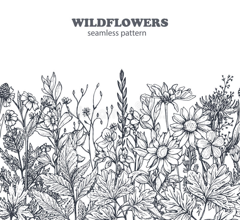 Vector el modelo inconsútil con las hierbas y las flores dibujadas mano stock de ilustración