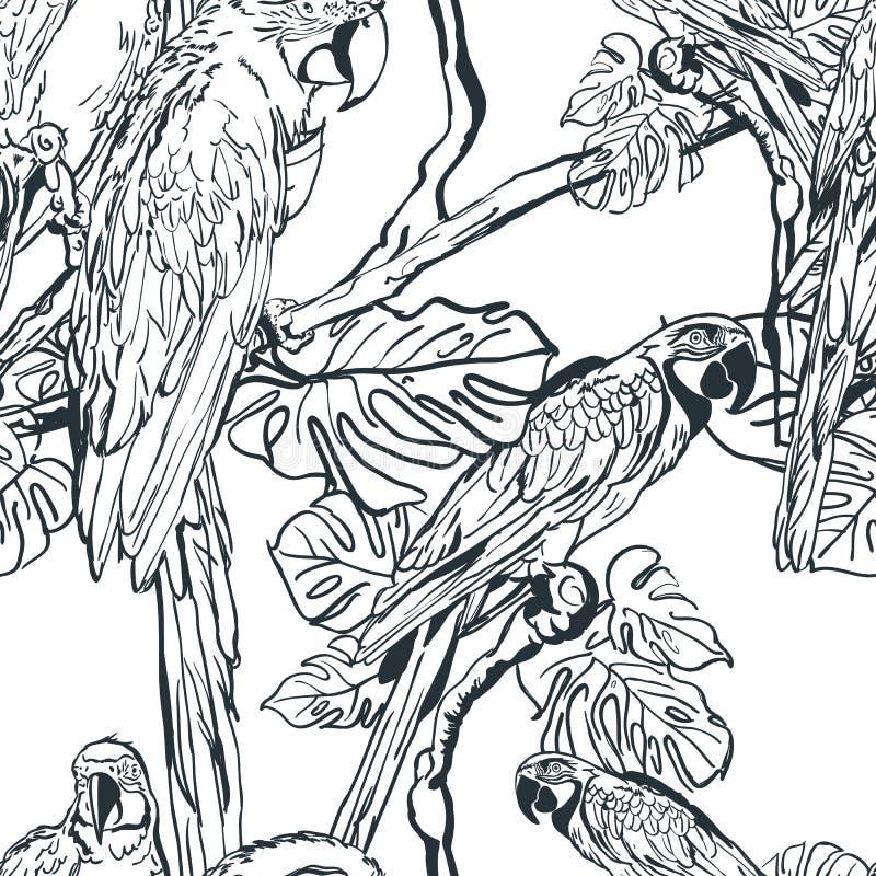Vector el modelo inconsútil con los pájaros tropicales del loro en árbol Ejemplo blanco y negro dibujado mano de la selva stock de ilustración