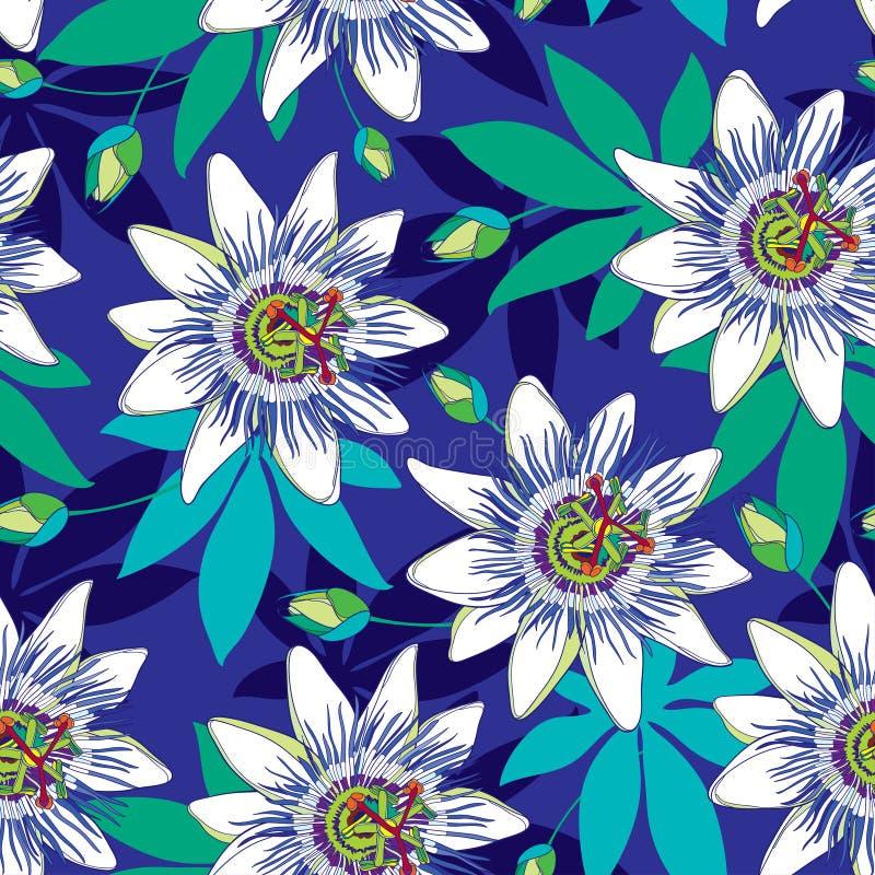 Vector el modelo inconsútil con pasionaria tropical del esquema o la pasión florece en azul y blanco, florezca y las hojas en el  stock de ilustración