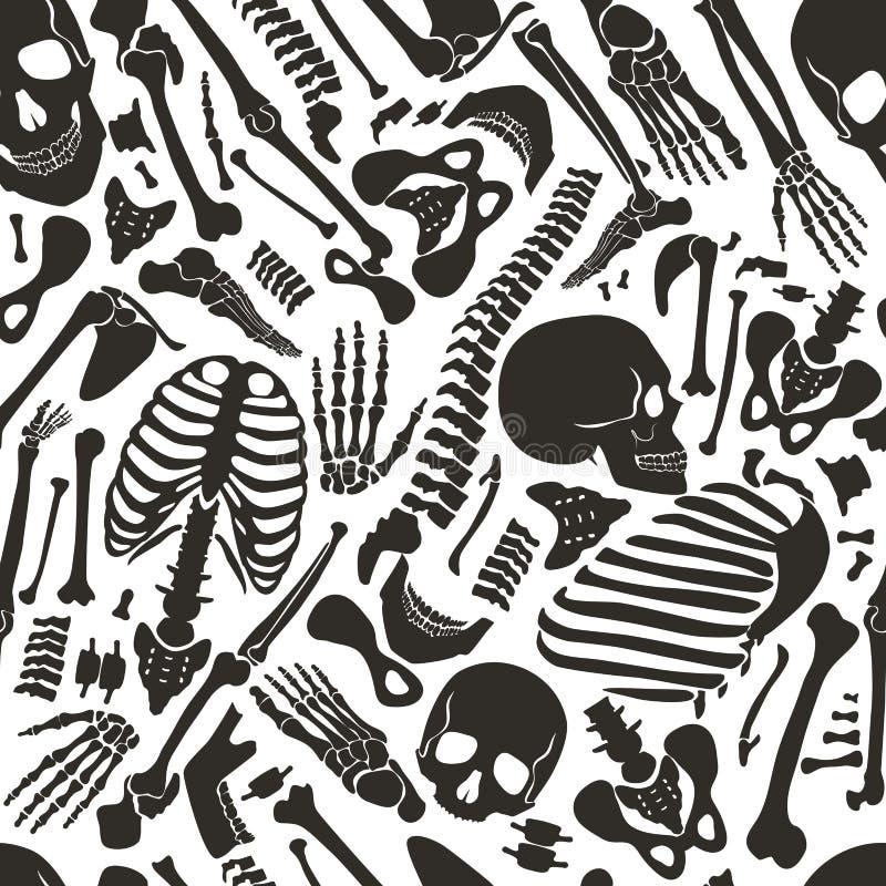 Vector el modelo inconsútil esquelético humano con los cráneos y otros diversos solos huesos humanos de las piezas ilustración del vector