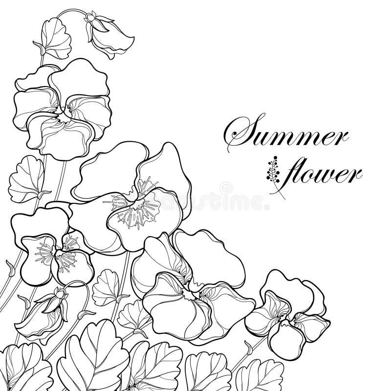 Vector el ramo de la esquina con el pensamiento del esquema o Heartsease o la flor tricolora y la hoja de la viola en negro aisla stock de ilustración