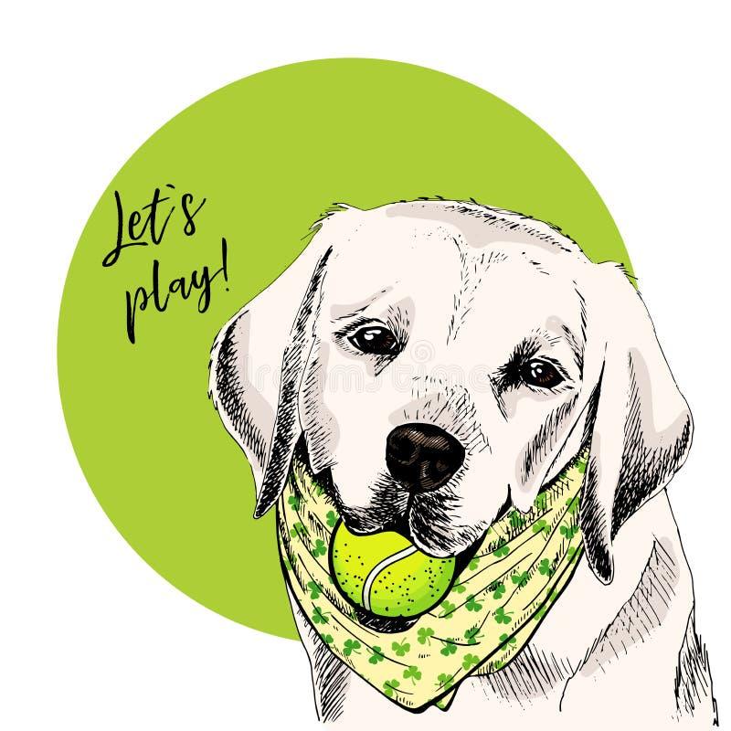 Vector el retrato del perro del labrador retriever con la pelota de tenis Deje el juego de s Curveball verde Ejemplo de la histor ilustración del vector