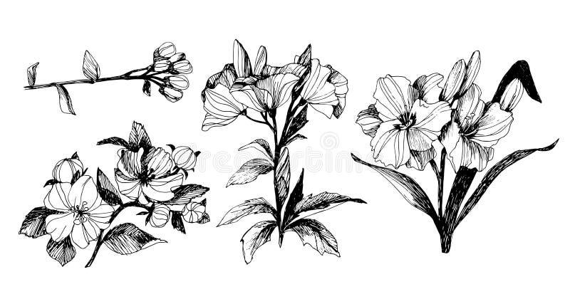 Vector el sistema floral con las peonías y las hojas, brotes de flor Gráficos lineares del vintage bosquejo stock de ilustración