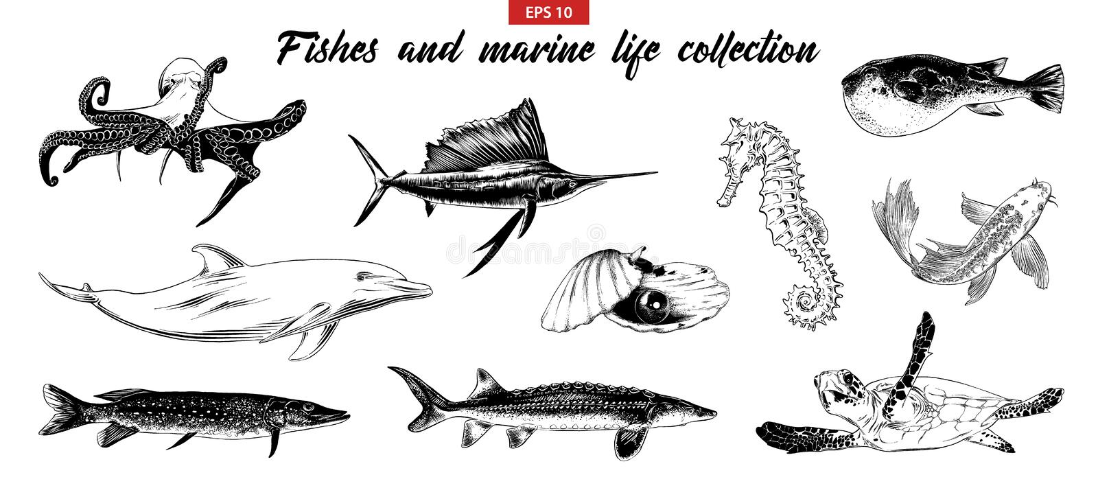 Hand drawn sketch set of fishes and marine life. Isolated on white background. Detailed vintage doodle drawing royalty free illustration