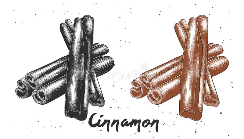 Hand drawn sketch of cinnamon in monochrome and colorful. Detailed vegetarian food drawing. Vector engraved style illustration for posters, decoration and print royalty free illustration