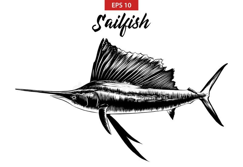 Hand drawn sketch of sailfish in black isolated on white background. Detailed vintage etching style drawing. royalty free illustration