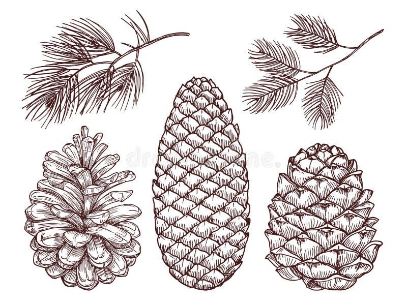 Vector exhausto del bosque de la mano Ramas y pinecones bosquejados del pino stock de ilustración