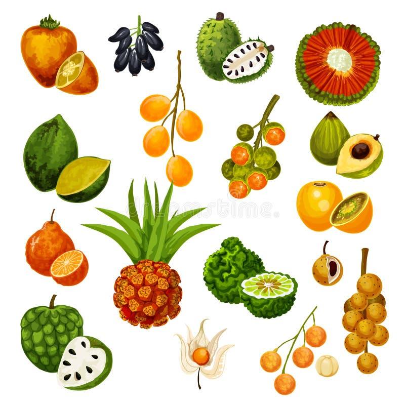 Exotic tropical fruits, vector icons. Vector exotic tropic fruits pandan or pandanus, longkong and soursop apple, mombin and naranjilla, jambolan and bergamot royalty free illustration