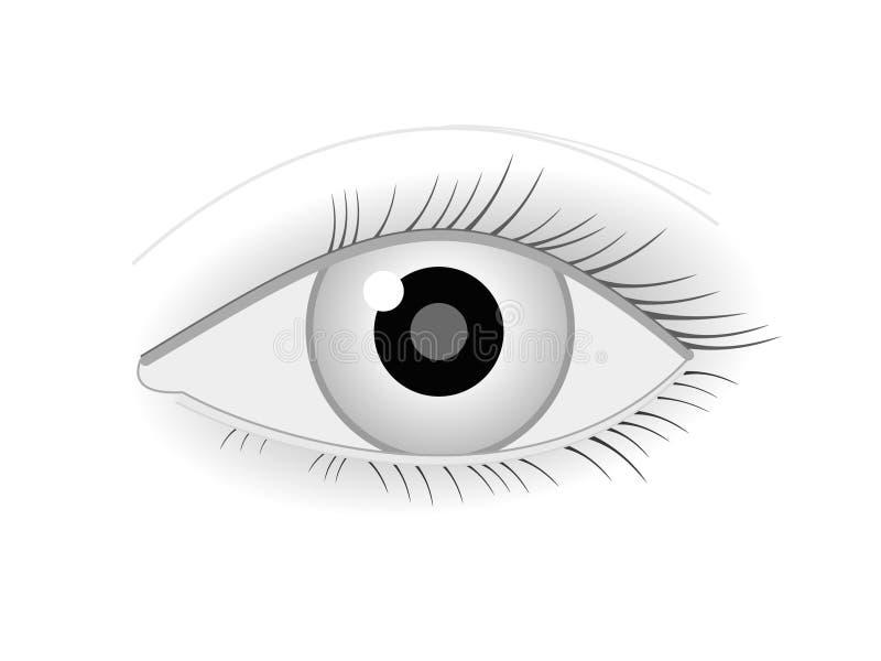 Download Vector eye stock vector. Illustration of iris, clip, glare - 15434095