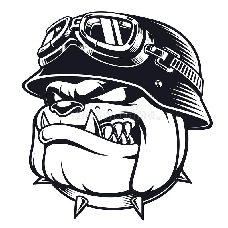 Bulldog biker with helmet. Vector face of bulldog biker with helmet. Motorcycle rider illustration. Shirt graphics.Isolated on white background royalty free illustration