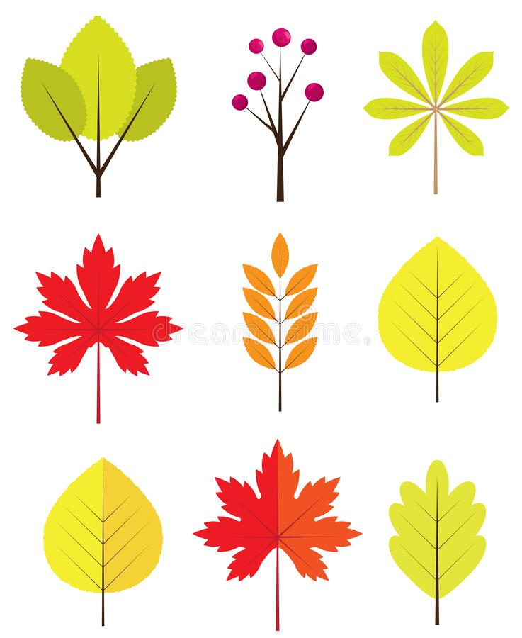 Vector Fall Leaves Isolated on White Background. Vector illustration of fall, autumn leaves. fall, autumn background. nature background stock illustration