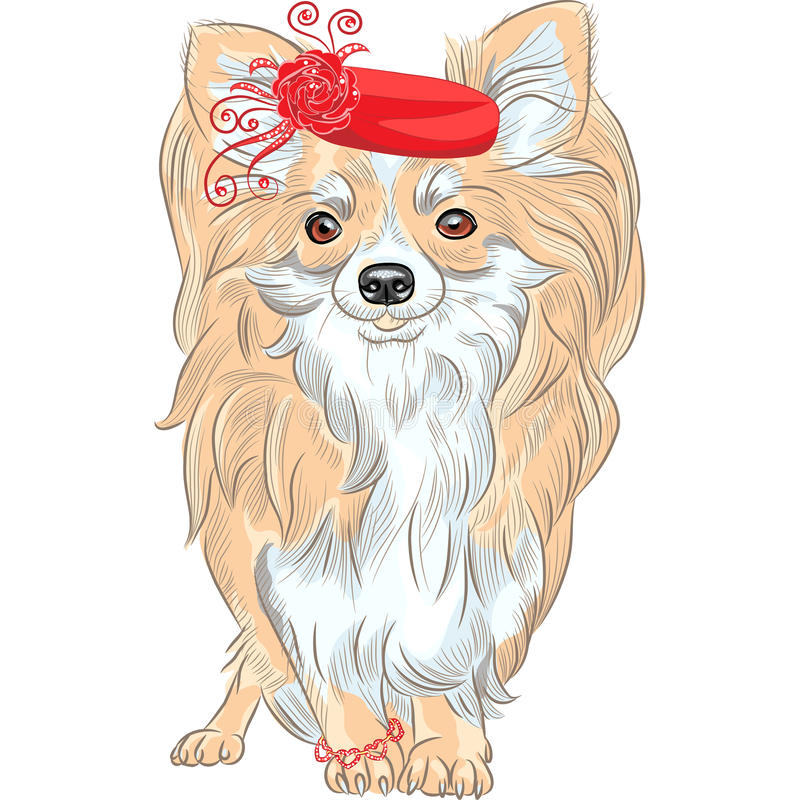 Vector fashion dog Chihuahua breed smiling. Color fashion cute dog Chihuahua in the red hat and bracelet vector illustration
