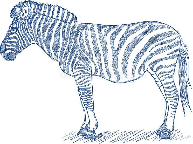 Vector Federskizze eines Zebra stock abbildung