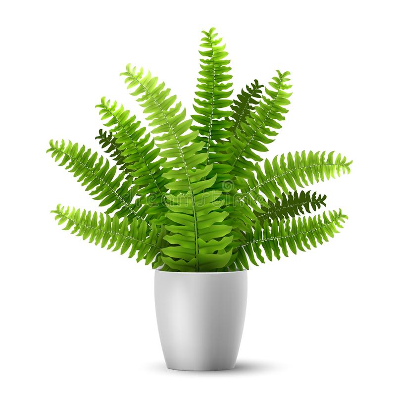Vector fern in a pot. Vector realistic fern in a pot. Ornamental houseplant royalty free illustration