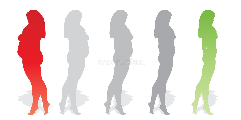 Vector fette überladene beleibte Frau gegen gesunden Körper des dünnen Sitzes vektor abbildung