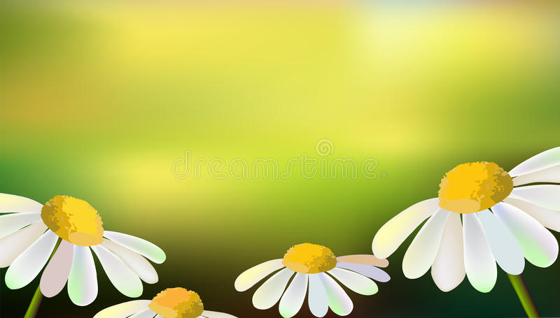 Vector field of the flowers-daisies royalty free illustration