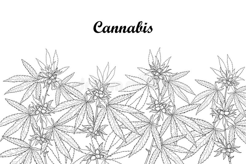 Vector field with outline Cannabis sativa or Cannabis indica or Marijuana. Branch, leaves and seed isolated on white background. royalty free illustration