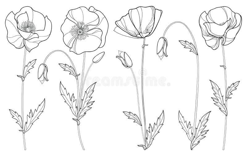 Vector fijado con la flor, el brote y las hojas de la amapola del esquema en negro aislados en el fondo blanco Elementos florales stock de ilustración
