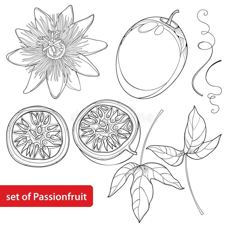 Vector fijado con la fruta de la pasión o Maracuya del esquema Media fruta, hoja y flor aisladas en el fondo blanco libre illustration
