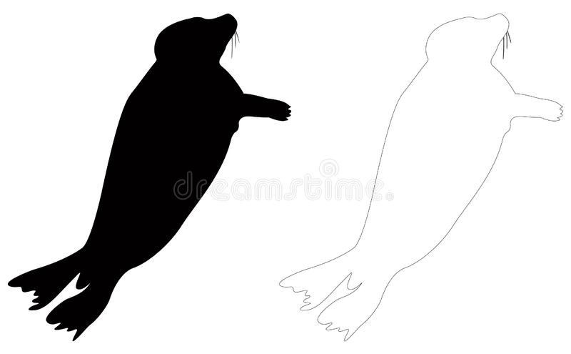 Seals or pinnipeds silhouette - semiaquatic marine mammals stock illustration