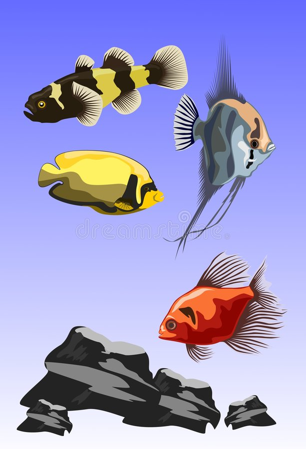 Vector fish royalty free stock photos