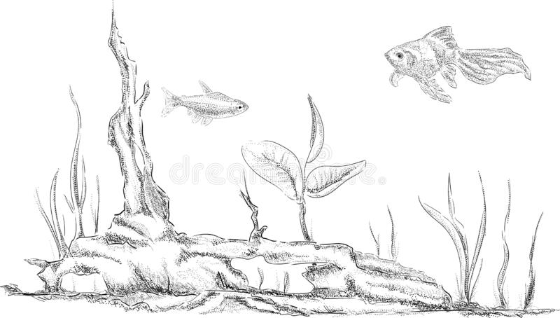 Vector - fish tank royalty free stock image
