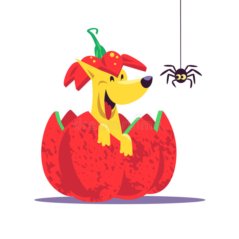 Vector flat cartoon illustration with Halloween dog character sitting in red pumpkin laughing with little spider. stock illustration
