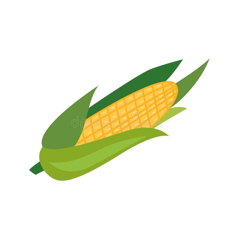 Vector flat corncob or corn ear icon royalty free illustration