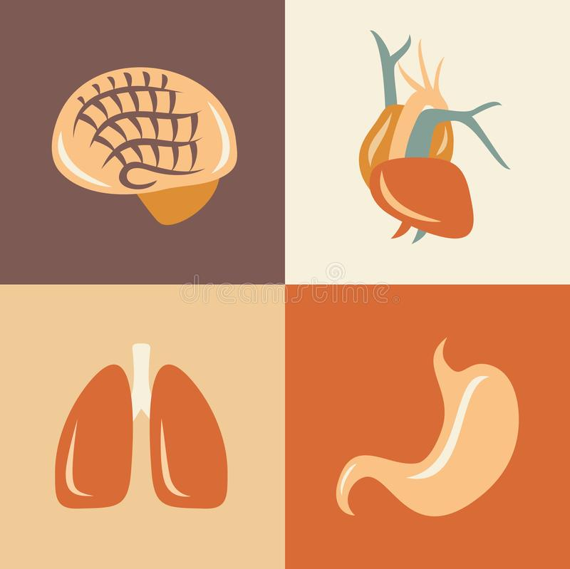 Vector illustration icon set of anatomy: brain, heart, lung, stomach. Vector flat illustration, icon set of anatomy: brain, heart, lung stomach stock illustration