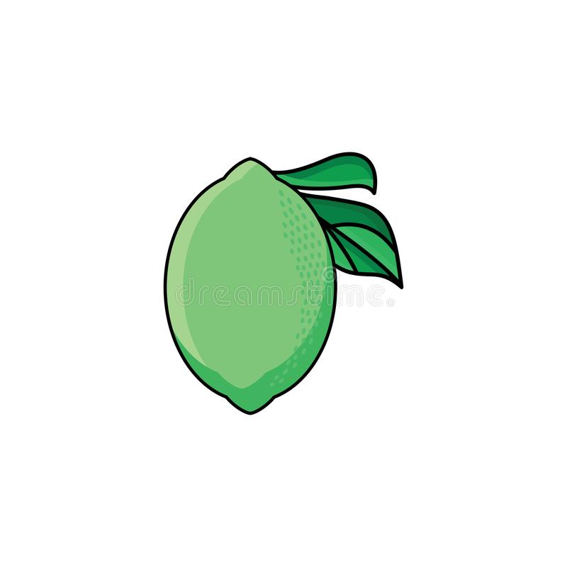 Vector flat sketch style green fresh ripe lime. Isolated illustration on a white background. Healthy vegetarian eating, dieting and lifestyle design object stock illustration