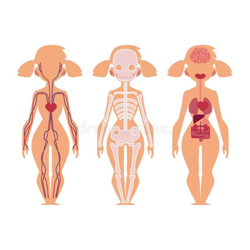 Vector People Internal Organs Anatomy, Structure Stock Vector ...
