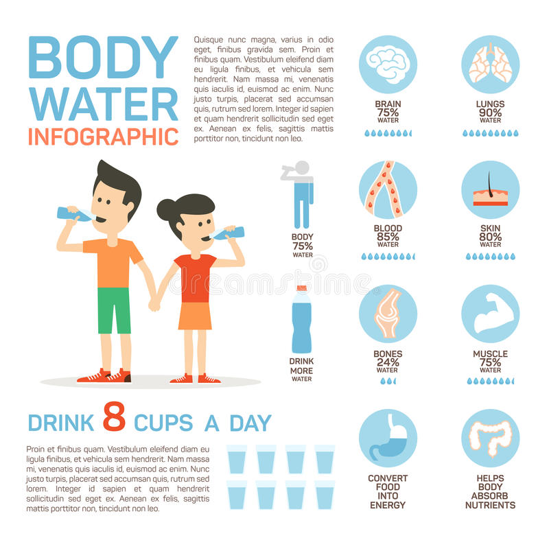 Vector flat style of body water infographic concept. Concept of drinking water, healthy lifestyle. Bottle brain body stock illustration